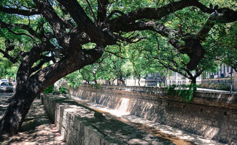 La Cañada Tree Agua Curso De Agua Glen River Stream
