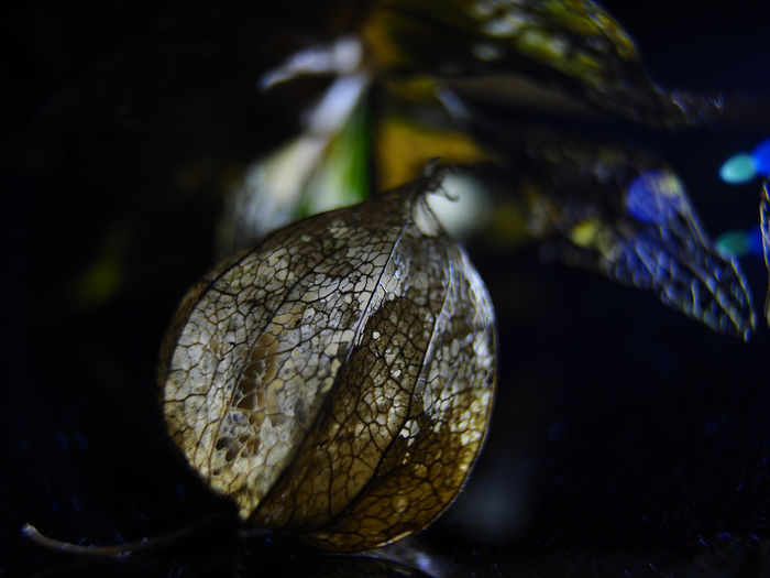 Close-up of fruit on dry leaf