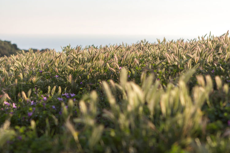 Blur Calm Depth Of Field Grass Holiday Italy Nature Outdoors Plant Sun Sunrise Sunset Trip Vacations
