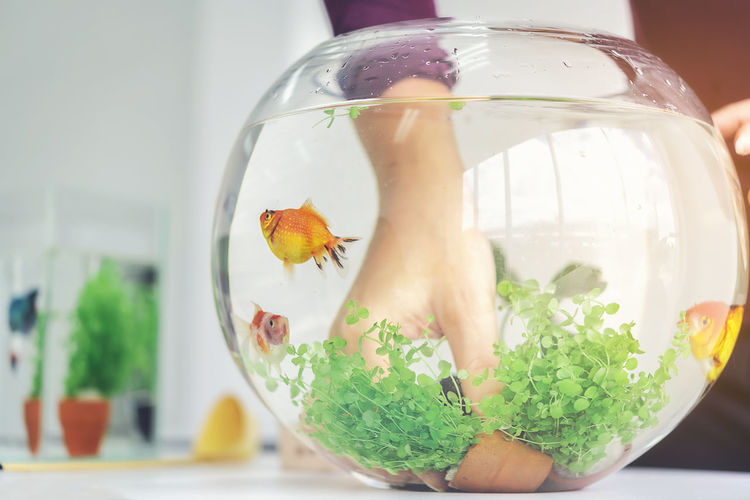 A woman's hand is decorating the aquarium in a fishbowl as a hobby. Animal Animal Themes Close-up Domestic Fish Fishbowl Focus On Foreground Food And Drink Glass Glass - Material Goldfish Indoors  Nature No People Pets Swimming Table Transparent Vertebrate Water