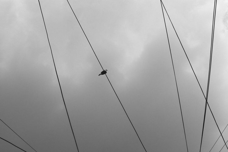 Low angle view of power cables against sky