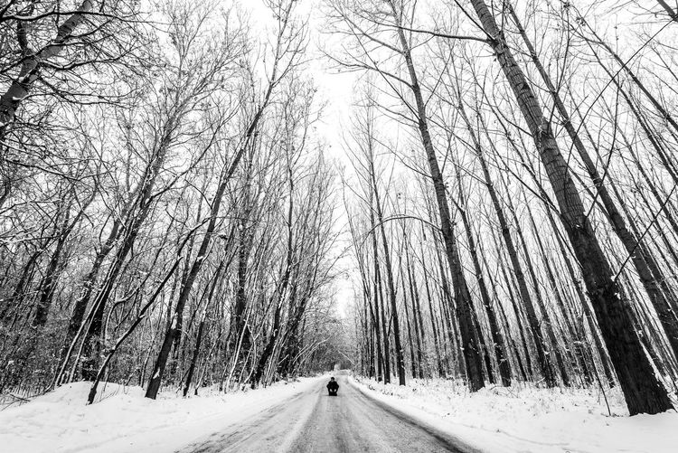 Sitting One Person Snowing Long Treelined WoodLand Forest Tranquility Scenics - Nature Covering Diminishing Perspective Road The Way Forward Direction Bare Tree Cold Temperature Winter Snow Outdoors Nature Beauty In Nature Plant Land Tree Blackandwhite