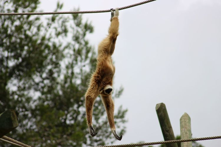 Monkey hanging on rope against sky