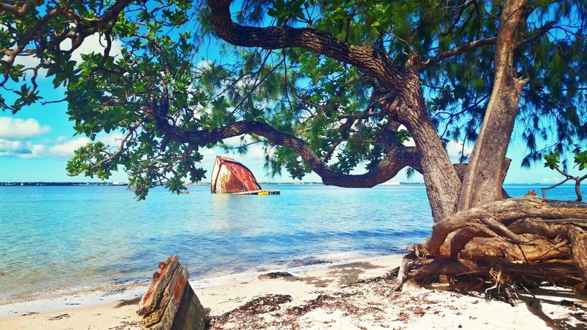 Tree Beach Sea Water Nature Sand Pangaimotu, Kingdom Of Tonga Beauty In Nature Day Outdoors Shadow Tree Trunk Tranquility Scenics No People Horizon Over Water Sky Branch Nautical Vessel Pangaimotu Kingdom Of Tonga