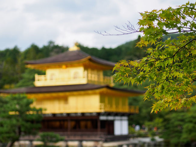 Kyoto Architecture Building Exterior Built Structure Cloud - Sky Cloudy Day Focus On Foreground Gold Green Color Growth High Section Kinkaku-ji No People Place Of Worship Sky Temple - Building Tree