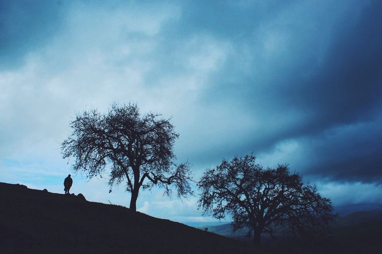 Dark Rainy Days Treescollection EyeEm Best Shots EyeEm Nature Lover Eye4photography  EyeEm Best Edits EyeEm Gallery EyeEmBestPics EyeEm Best Shots - Nature Eye Em Nature Lover