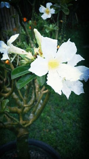 Wet White Flowers Eyemnaturelover