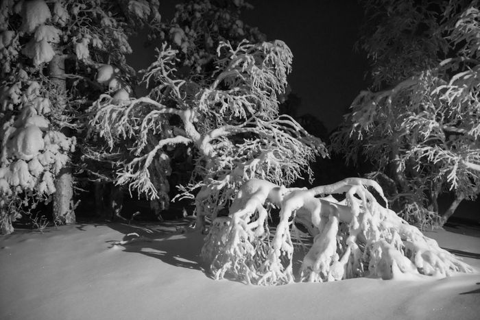 Black Black & White Black And White Blackandwhite Photography Cold Cold Winter ❄⛄ Finland Finland Winter Night Nightphotography No People Smooth Snow Snow Tree Tree Under The Snow Under The Snow