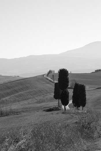 Pienza Pienza (toscana) Paesaggio Crete Senesi Siena Val D'orcia Cypresses Landscape Environment Sky Scenics - Nature Land Tranquil Scene Plant Tranquility Beauty In Nature Field Mountain Nature Day Agriculture Tree No People Rural Scene Copy Space Outdoors Non-urban Scene