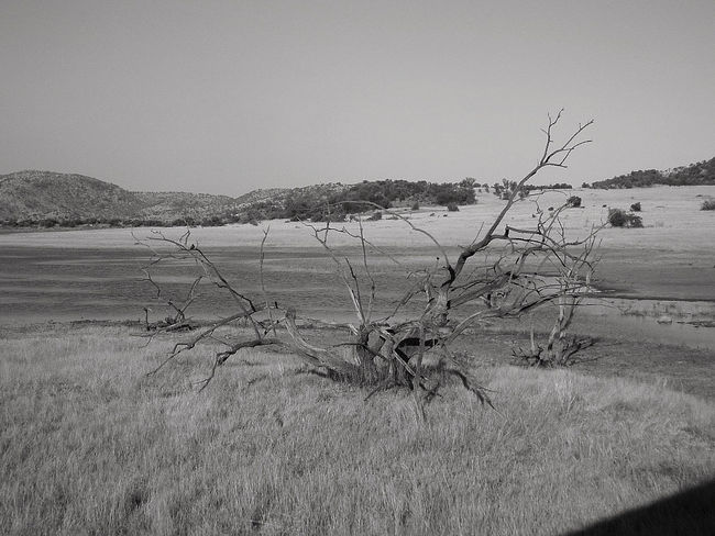 African Beauty African Landscape African Safari Bare Tree Beauty In Nature Black And White Clear Sky Day Dead Tree Field Grass Landscape Nature No People Outdoors Scenics Sky South Africa Tranquil Scene Tranquility Tree Water