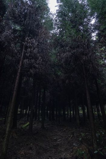 Japan Photography Japan Tree Plant Forest Land Growth Beauty In Nature Tranquility No People Nature Tranquil Scene Non-urban Scene Outdoors Scenics - Nature Landscape Idyllic Night Trunk Tree Trunk WoodLand Environment