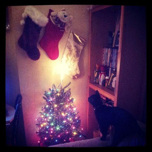 Noseykitty Moonssecondchristmas