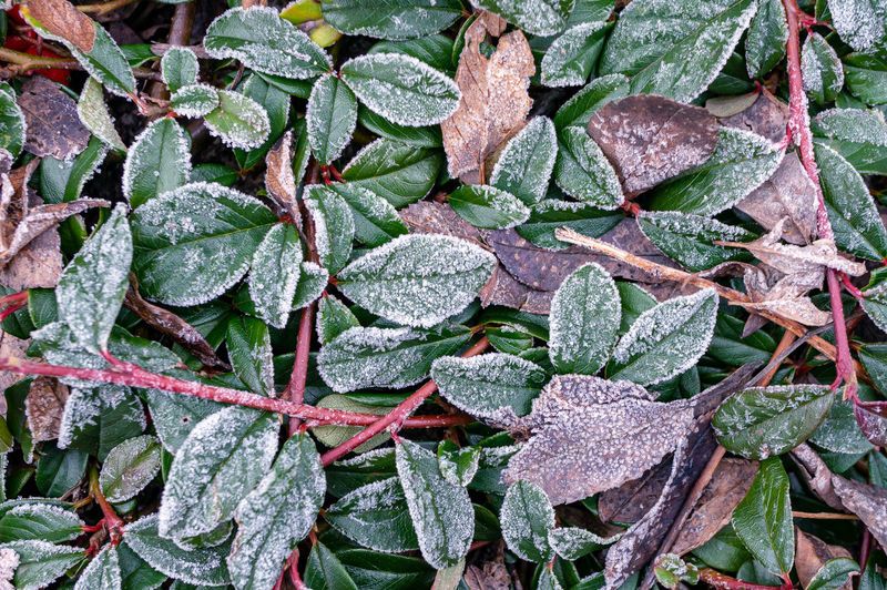High angle view of leaves on plant during winter