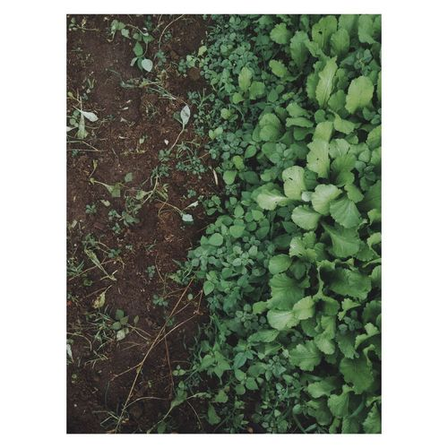 Directly above shot of plants growing on field