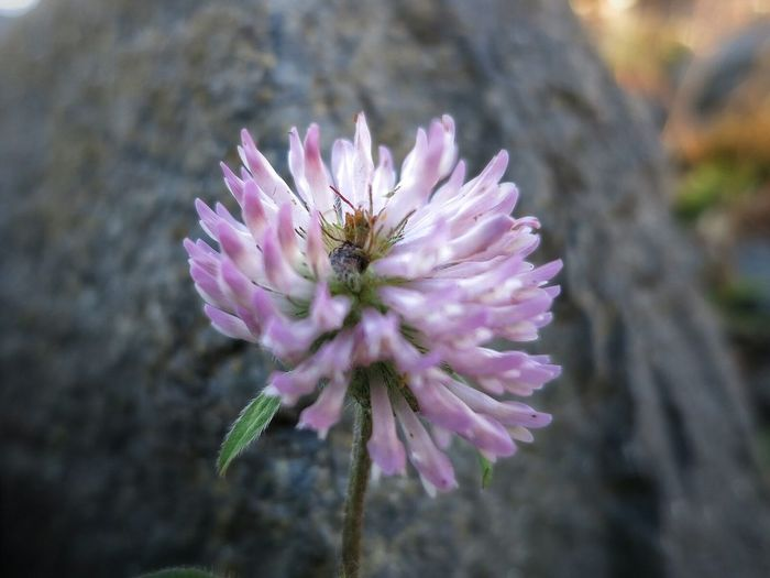 Clover in mid November , by the Lakeshore . A Macro photo.
