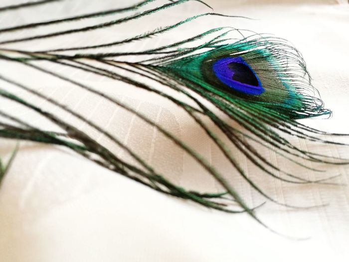 plume de paon Peacock Peacok Feather Paon Plume De Paon Beauty Bird Feather  Blue Close-up