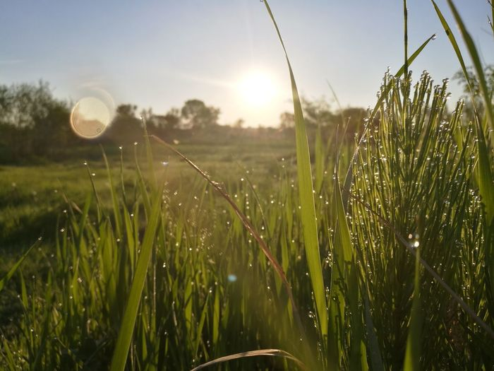 Growth Nature No People Outdoors Cereal Plant Plant Day Sunlight Grass Beauty In Nature Close-up Freshness Sky