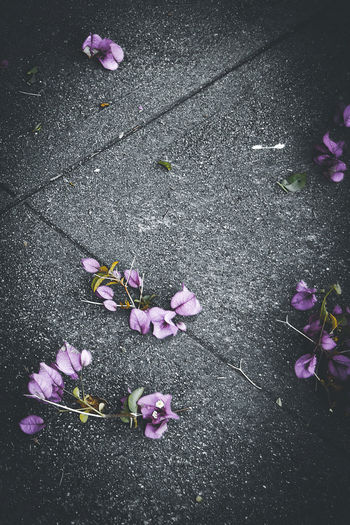 High angle view of pink petals on footpath