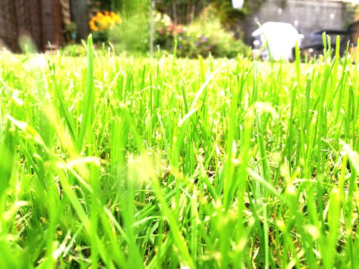 Grass Growth Field Plant Freshness Blade Of Grass Close-up Beauty In Nature Nature Tranquility Focus On Foreground Green Grass Green Color