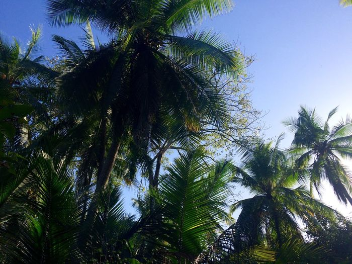 Palm Trees Sky Beach Outdoors Beauty In Nature