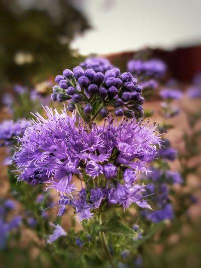 """""""Purple Bliss"""""""