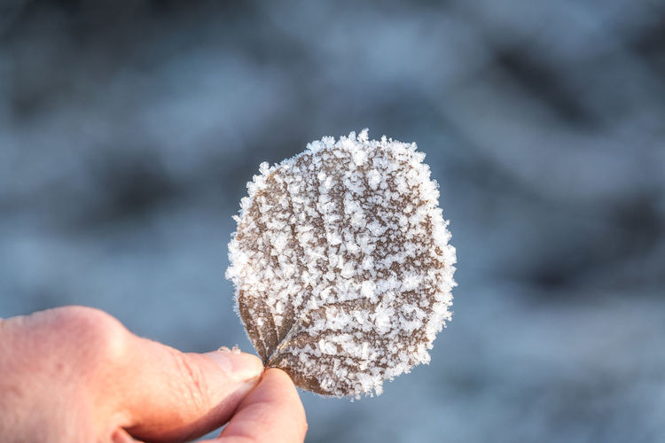 Human Hand Hand Human Body Part Holding One Person Body Part Focus On Foreground Cold Temperature Winter Nature Day Frozen Snow Close-up Personal Perspective Finger Outdoors Human Limb Leaves Frozen Leafe EyeEm Nature Lover