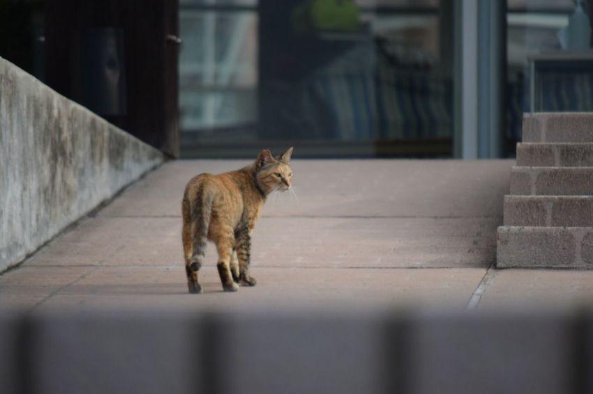 One Animal Animal Themes Cat Stray Animal No People 生きる