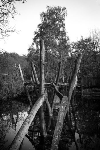 Stillmoment Blackandwhite Black And White Black Background Still Life Adventurenaturetrips Growth Non-urban Scene Beauty In Nature Damaged Lake Wood - Material Nature Day Tranquility Water Tree Plant Land Abandoned Forest No People Sky Tranquil Scene Zoology