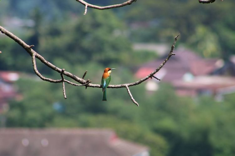 Bee eater outside The Kek Lok Si Temple Birds Malaysia Beutiful Bird Bee Eater Bird Beauty In Nature
