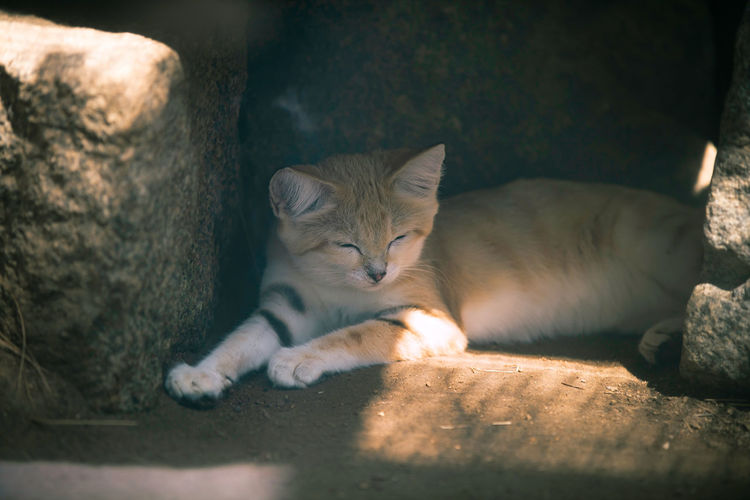 Portrait of cat sleeping