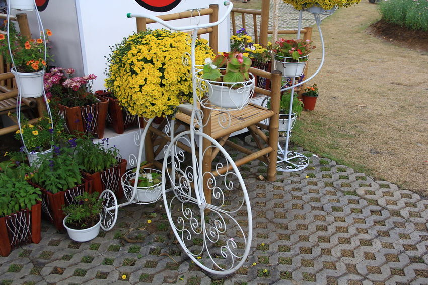 bicycle who give flower of romantic for your soulmate Activity Beloved Bicycle Chair Day Flower Flower Market Flower Shop Flower Store For Sale Garden Garden Photography Giving Giving Love To The World🌍❤️ Holiday Nature Outdoors Plant Potted Plant Retail  Soulmate ❤️ Sweetheart Transportation Valentine Valentine's Day