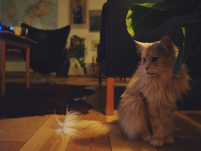Cat sitting under a plant at home in a candid low light with the room in the background.
