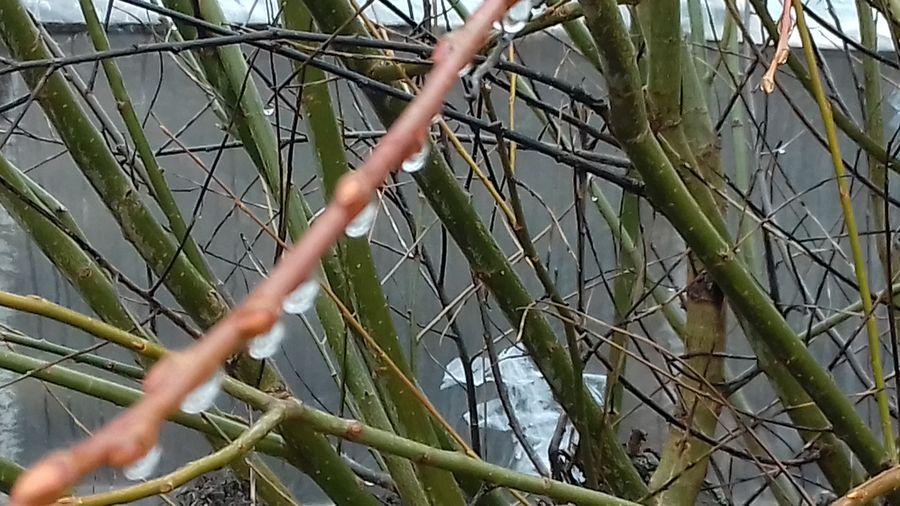 ветки вода Tree