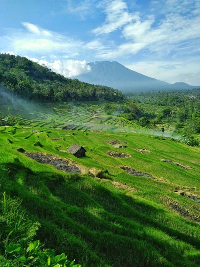 landscape Nature Tranquility Green Color Ricefield View Ricefields Rice Terraces Volcano Beauty In Nature Growth Green Color Nature Agriculture Tree Beauty In Nature Sky Landscape Cloud - Sky No People Rural Scene Scenics Tranquility Outdoors First Eyeem Photo