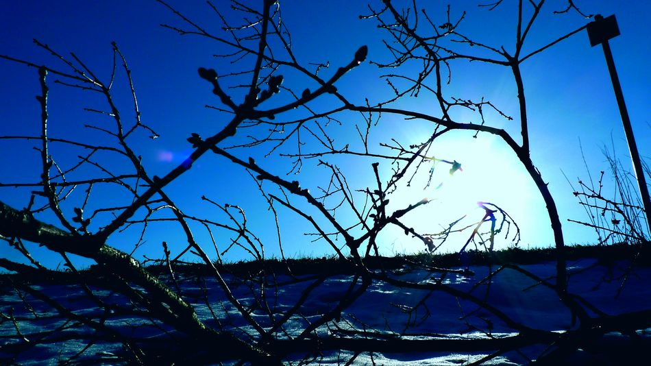 Winter Details Sky Blue Tree Low Angle View Branch Tranquility Outdoors