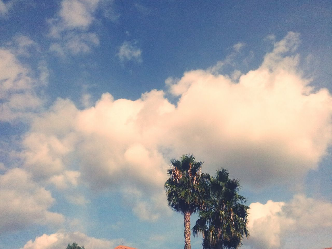 sky, beauty in nature, nature, low angle view, cloud - sky, tree, tranquility, scenics, outdoors, day, palm tree, no people, blue