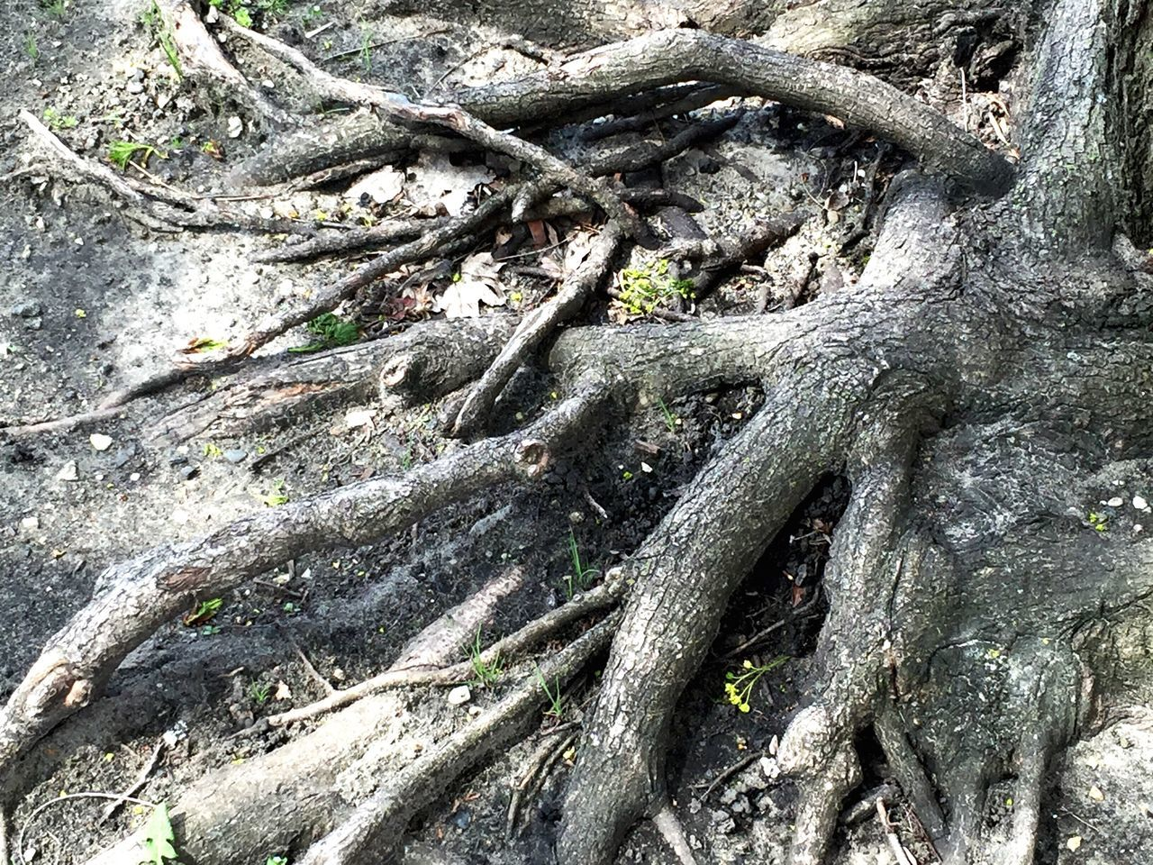 tree, tree trunk, day, no people, outdoors, root, nature, textured, high angle view, growth, full frame, close-up