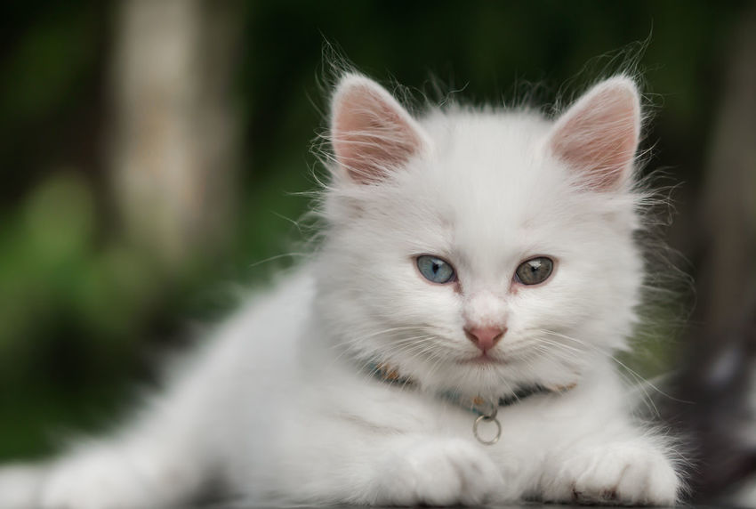 White Cat. Beautiful Cute Cat Kitty Meow Moggy Adorable Animal Themes Cute Day Domestic Animals Domestic Cat Feline Ginger Kitten Little Looking At Camera Mammal Mammals No People One Animal Pets Portrait Scratching Whisker White