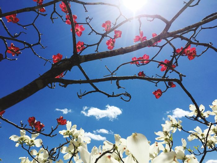 Flowers with sky in background
