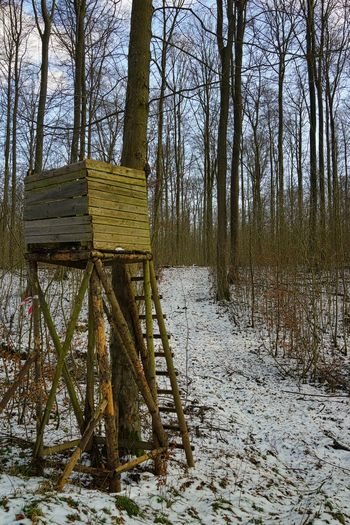 Anstand Buchenwald Hochwald Jagd Jägerstand Lichtung Waldweg