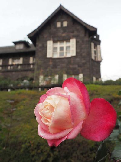 2018/12/05 Wed ☔☁ おはよ〜ございます。 ちょっと紅葉で色が単調になってきたので、秋バラを差し込んで見ました。 Date:2018/11/26 Location:東京・旧古河庭園 ファインダー越しの私の世界 ファインダーは私のキャンパス オリンパス Olympus E_M5Mark2 Om_d ミラーレス Photograph Photography カメラ日和 お写んぽ スナップ写真 Tokyo Beautiful カメラのある生活 あなたに見せたい写真がある 写真は心のシャッター 恋するカメラ 秋は駆け足 旧古河庭園 薔薇 Flower Flower Head Pink Color House Close-up Architecture Building Exterior Built Structure