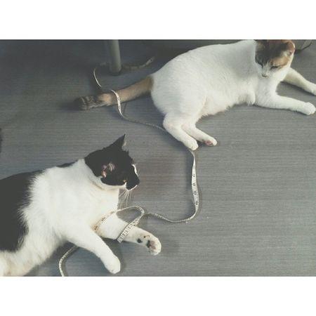 Bestfriend Catslover Playful Maruchan  Brucelee