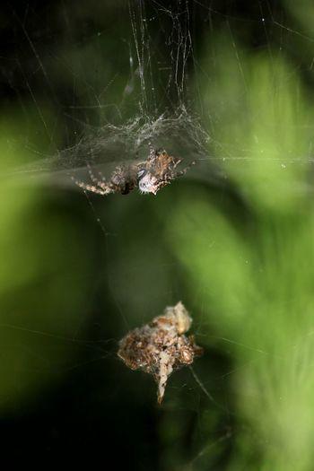 Maximum ClosenessMacro Nature Spider Arachnophobia War Insect Animal Themes