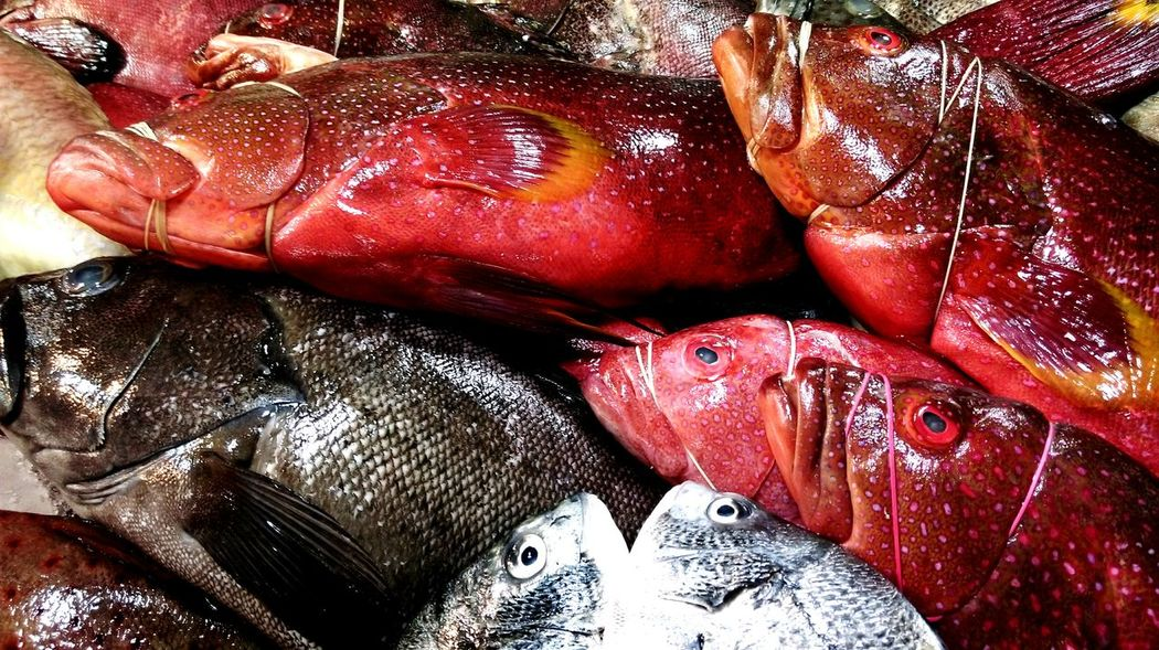 Still Breathing Great Variety Fresh From The Ocean Fish Rule Of Thirds Dark Pink By Motorola Fresh Produce Repicture Food The Foodie - 2015 EyeEm Awards My World Of Food Millennial Pink Visual Feast Food Stories