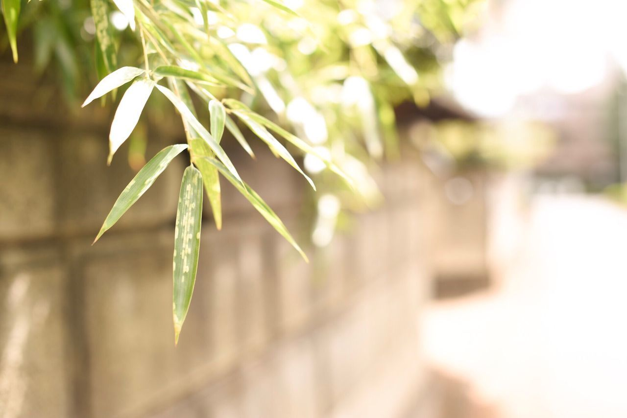 growth, nature, plant, close-up, green color, no people, focus on foreground, outdoors, day, freshness, beauty in nature