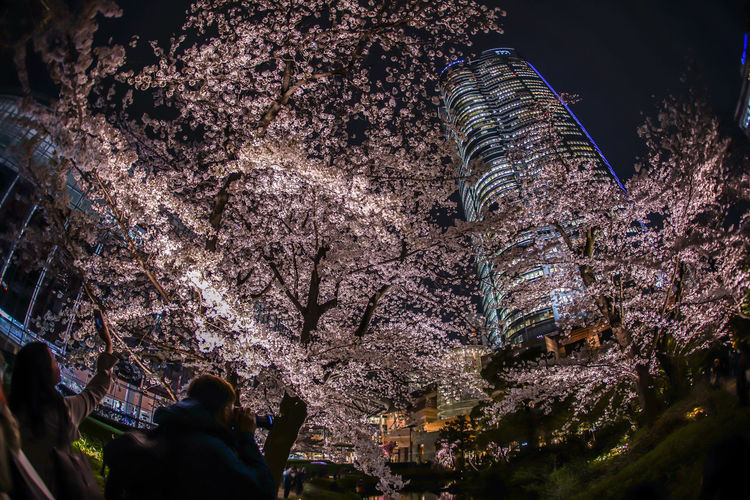 Low angle view of people on cherry blossom at night