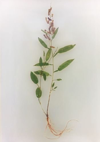 Herbarium Leaf Plant Nature Art, Drawing, Creativity China Beauty ArtWork Art Arts Culture And Entertainment Green Green Green!  Museum Of Art Greenery No People Green Color Herbarium Museum Of Natural History Green China Cool Beauty In Nature Nature Growth Color Plant