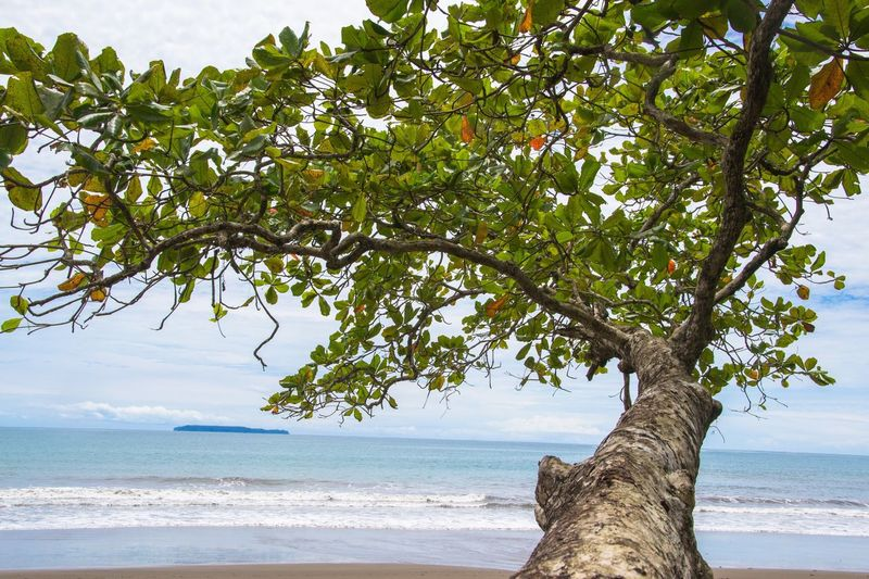 Tree Sea Nature Beach Horizon Over Water Branch Scenics Beauty In Nature Growth Tranquil Scene Outdoors Sky Tranquility Day Water Tree Trunk Fruit No People