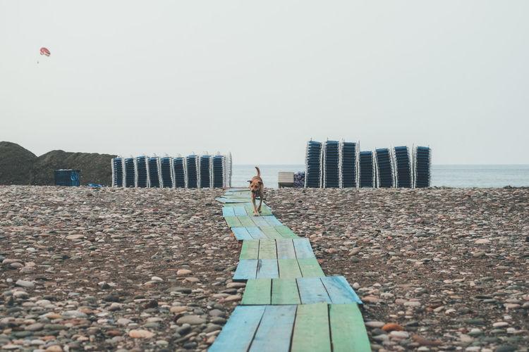 Dog walking on footpath at beach