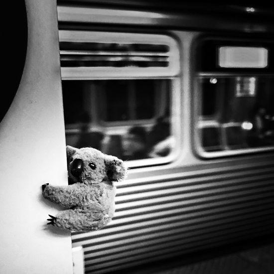 Monday scenes from the CTA Blackandwhite Train - Vehicle Stuffed Toy Transportation Public Transportation No People